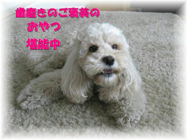 088_convert_20111022210754.jpg