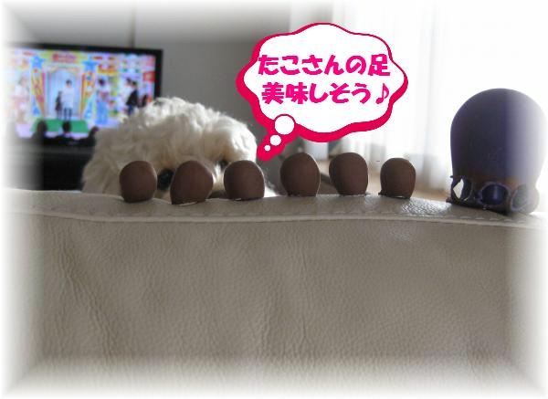 088_convert_20111212135317.jpg