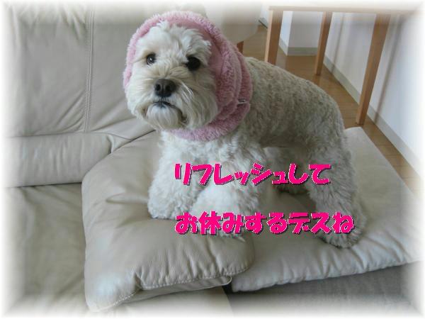 103_convert_20120203153154.jpg