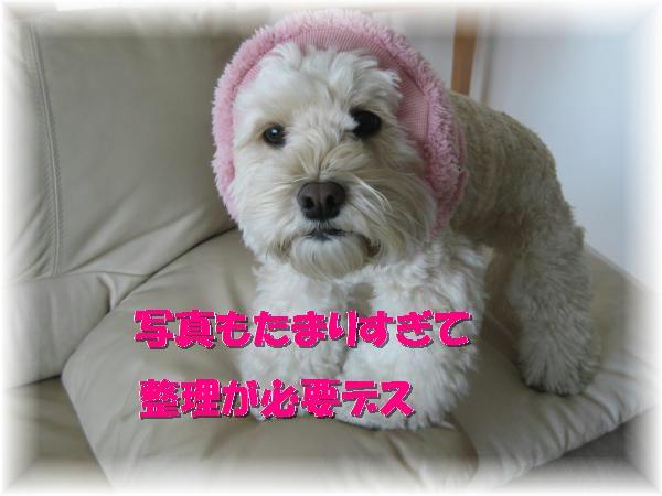 107_convert_20120203155258.jpg