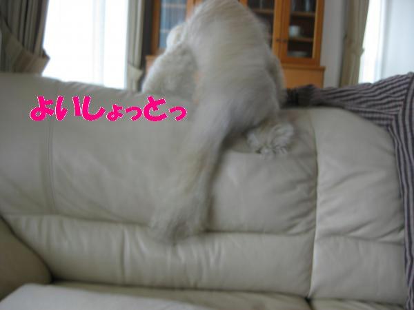 108_convert_20110918112235.jpg