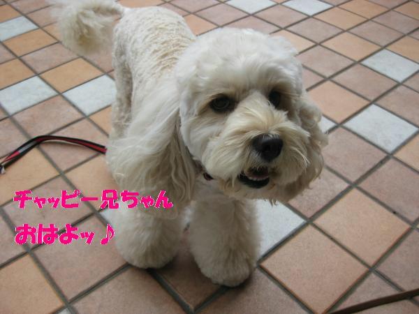 110_convert_20110905132043.jpg