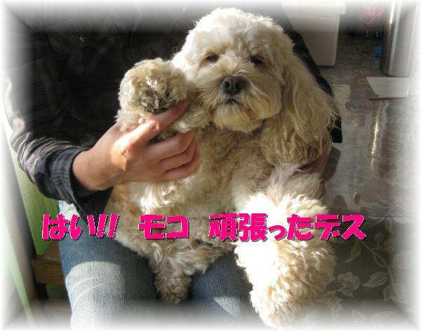111_convert_20120103002929.jpg