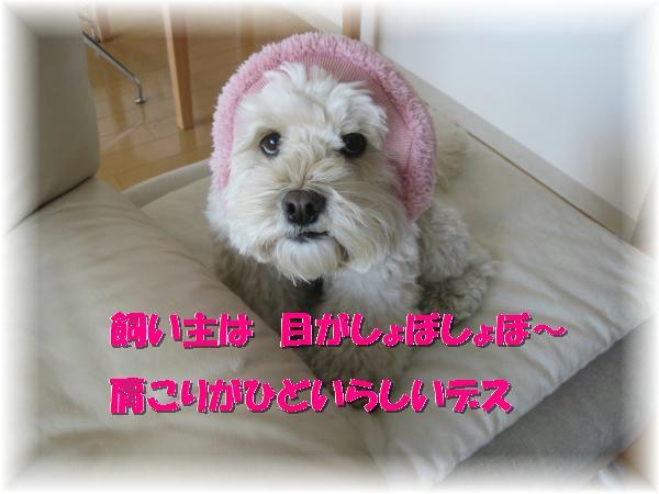 113_convert_20120203155229.jpg