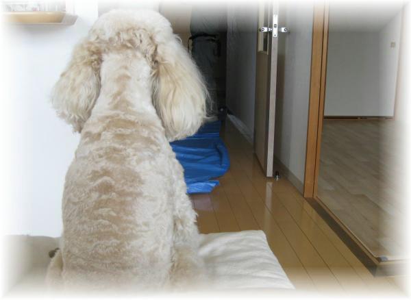 115_convert_20111125134558.jpg