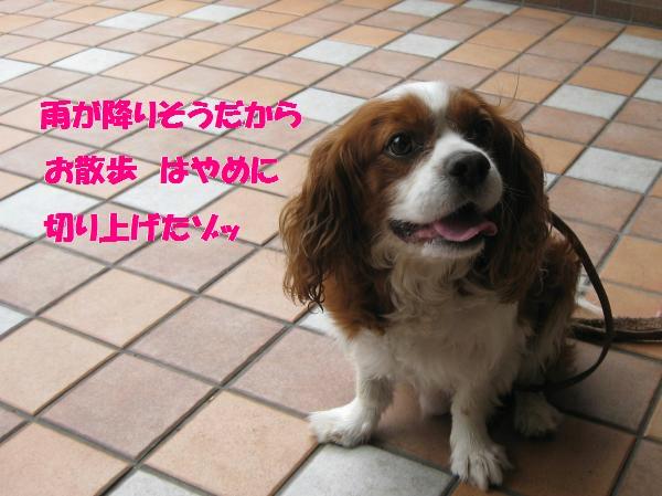 118_convert_20110905132101.jpg