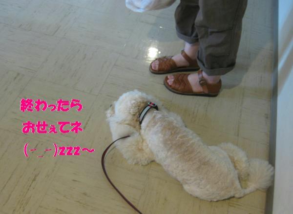 152_convert_20110905132147.jpg