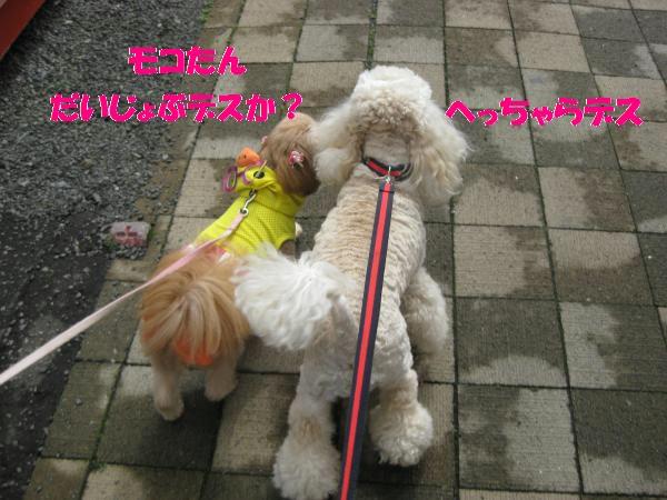 172_convert_20110912142350.jpg