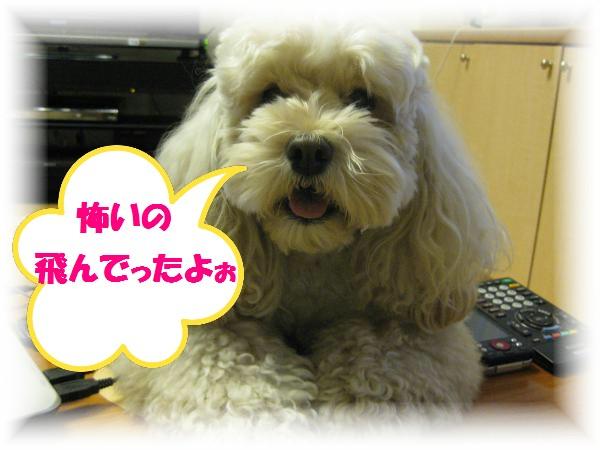 179_convert_20111207163838.jpg