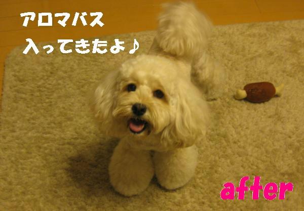 190_convert_20110904075748.jpg
