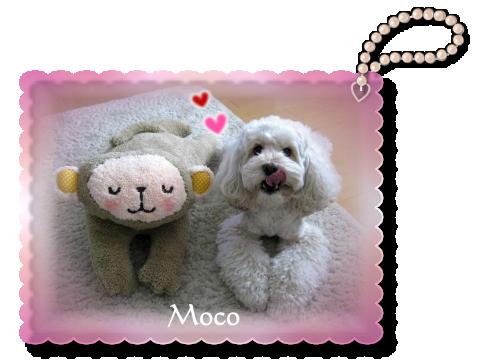 moko01 02