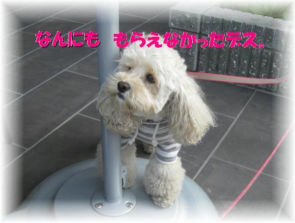 203_convert_20111101204135.jpg