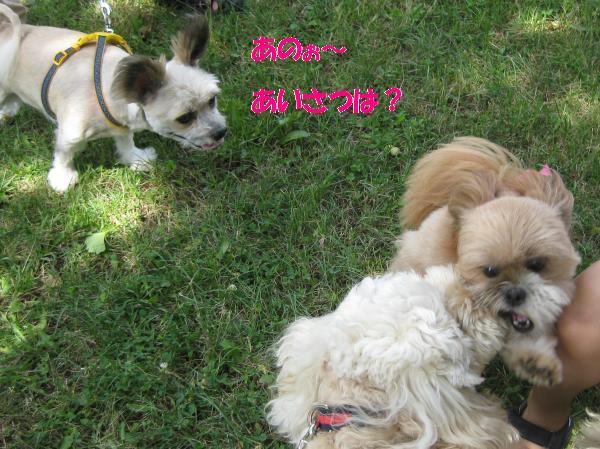 289_convert_20110818175021.jpg