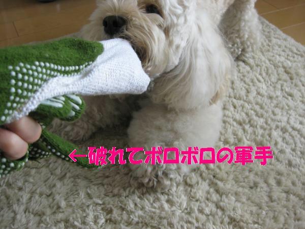 295_convert_20110831141651.jpg