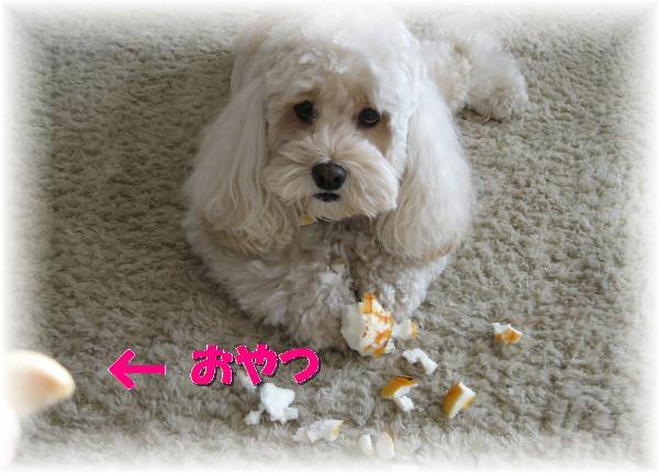 304_convert_20111123211509.jpg