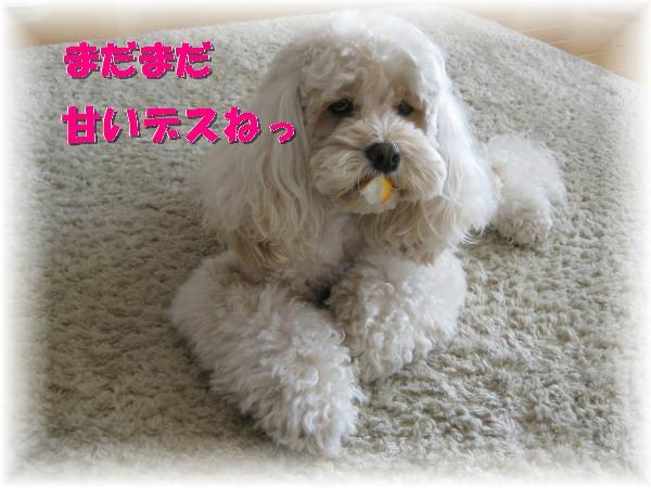 316_convert_20111122215803.jpg