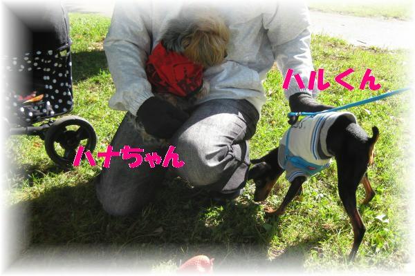 319_convert_20111013190831.jpg