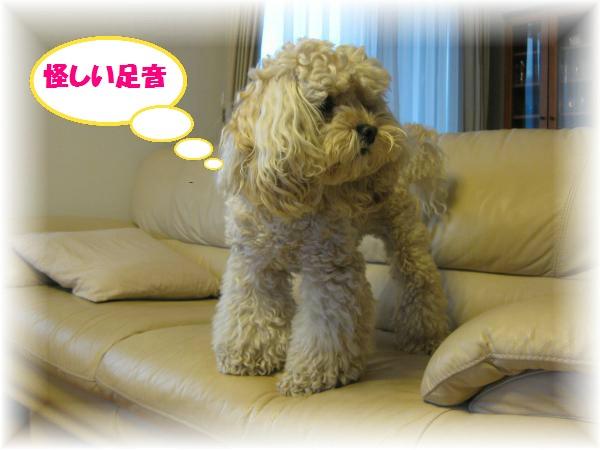 366_convert_20111120205658.jpg