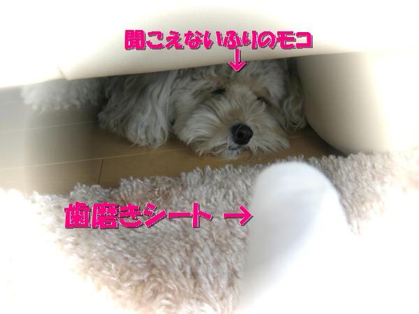 382_convert_20111022210359.jpg