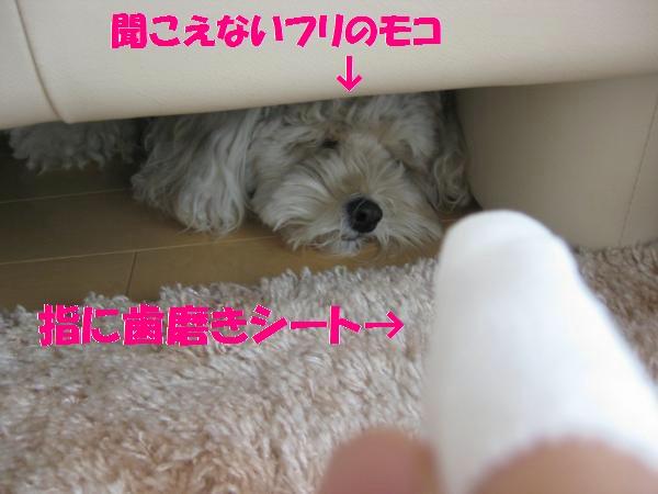 383_convert_20110930144330.jpg