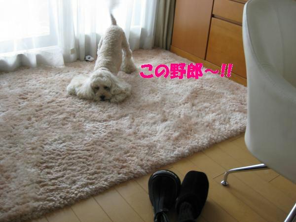 385_convert_20110910143616.jpg