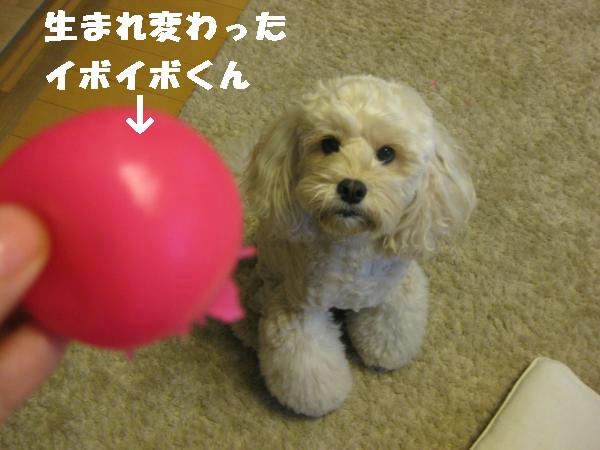 389_convert_20110911220124.jpg