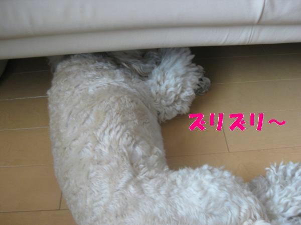 394_convert_20110930144511.jpg