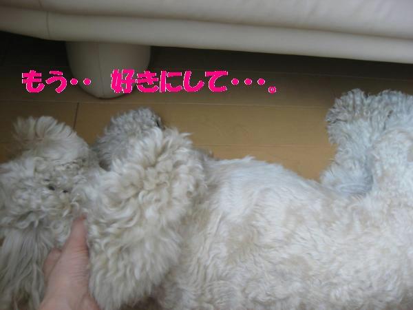 399_convert_20110930144613.jpg