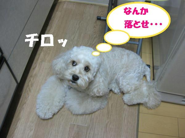 416_convert_20110905201241.jpg