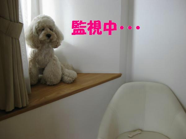 421_convert_20110917135812.jpg