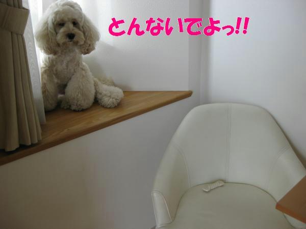 422_convert_20110917135836.jpg