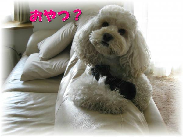 477_convert_20111017190916.jpg