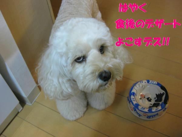 560_convert_20110905200948.jpg