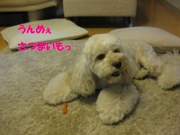 573_convert_20110905201144.jpg