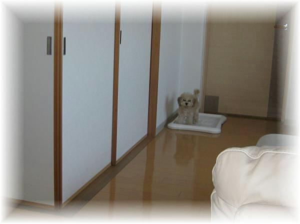 IMG_0227_convert_20111028200541.jpg