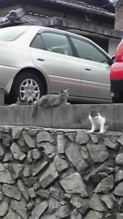 近所のネコさん。