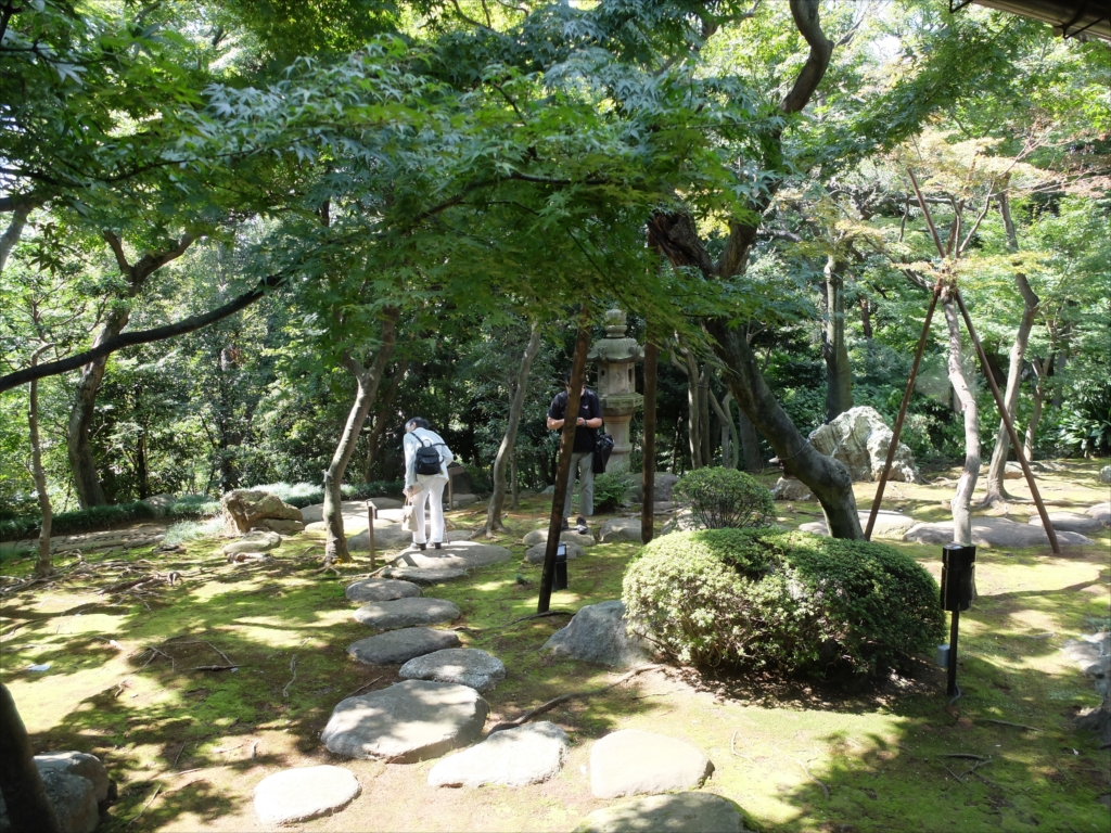 廊下から見た庭の一部
