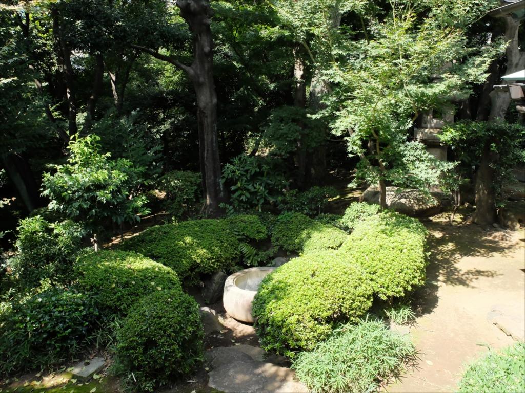 ここから見る庭も風情あり_1