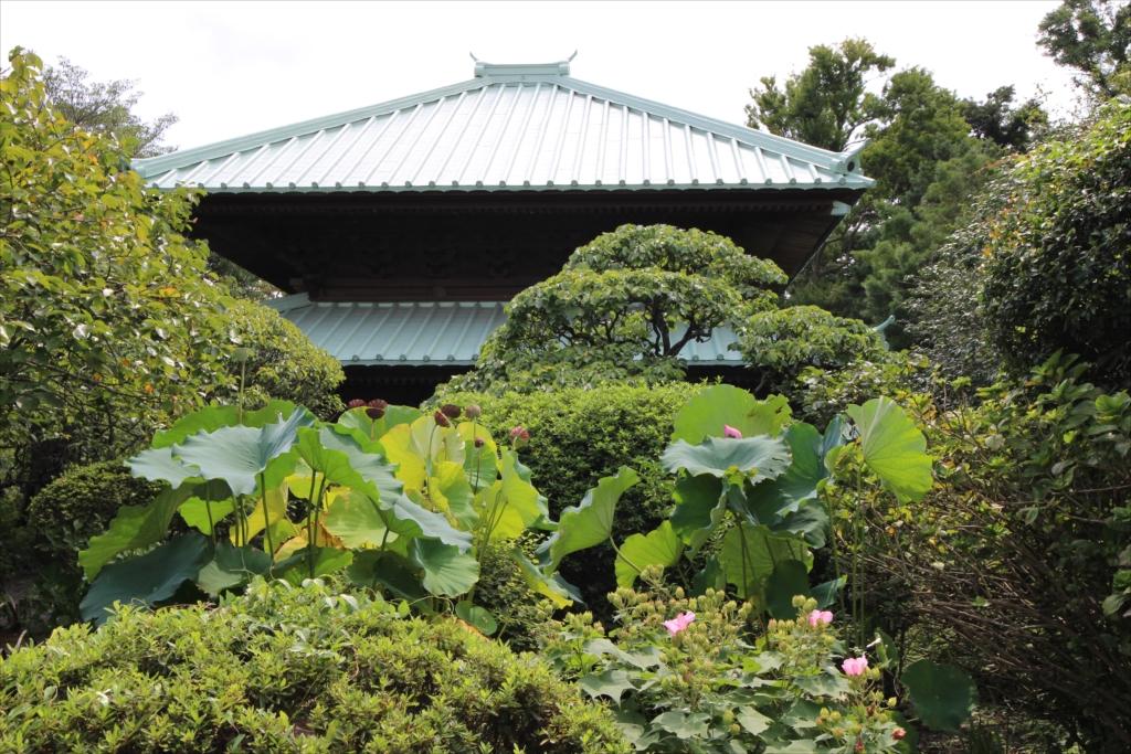 英勝寺は花の寺でもある