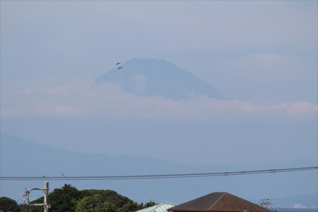 鳥が富士登山飛行中