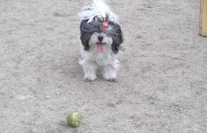 あずとテニスボール4