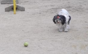 あずとテニスボール6