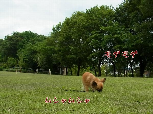RIMG0498_002.jpg