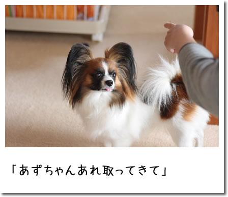 IMG_8302_2.jpg