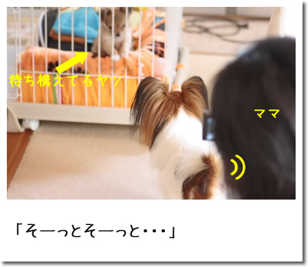 IMG_8303_2.jpg