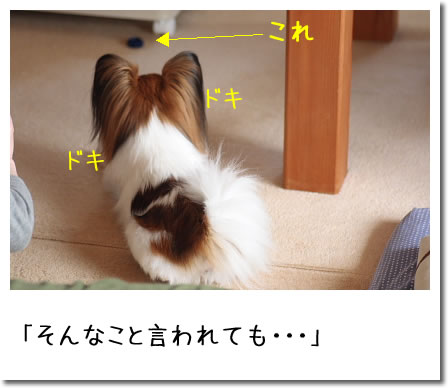 IMG_8305_2.jpg