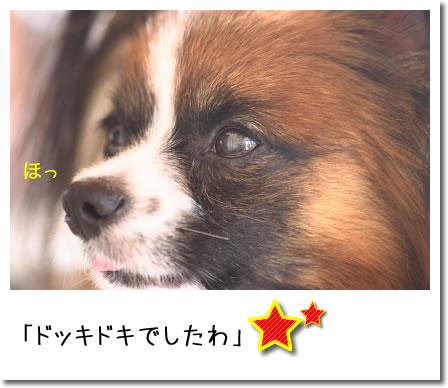 IMG_8326_2.jpg