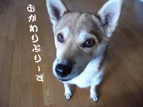 P1280821-AZUKI.jpg