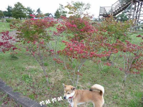 P1280867-AZUKI.jpg