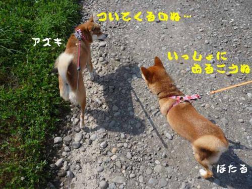 P1280879-AZUKI.jpg
